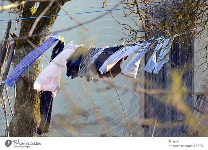 Wäscheleine Gefühle Garten Wetter Wind Häusliches Leben Schönes Wetter frisch nass Bekleidung Sauberkeit Ast trocken Baumstamm Wäsche waschen hängen