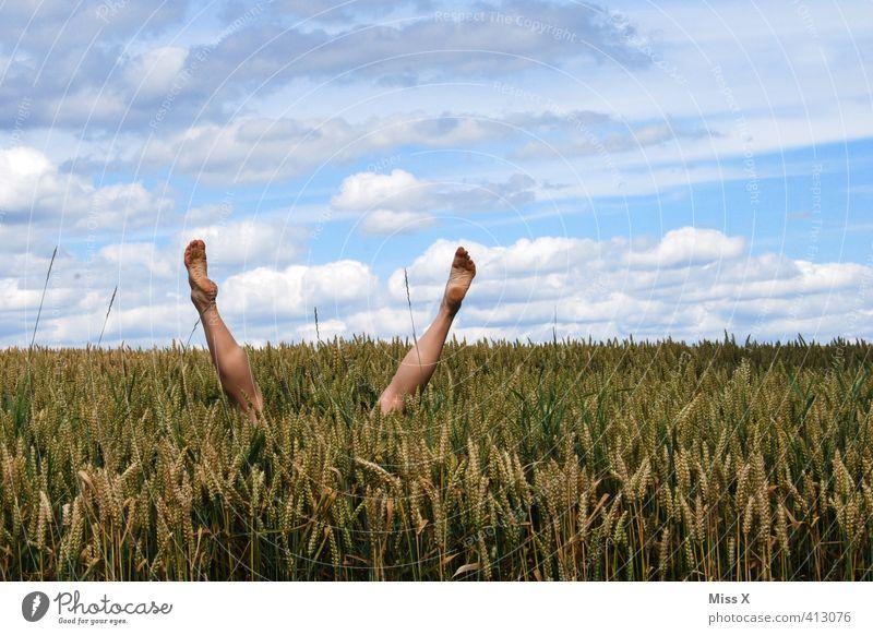 Tauchen Mensch Freude Spielen lustig Beine springen Fuß Feld tauchen verstecken Kornfeld hüpfen Unsinn Handstand Weizenfeld kopfvoran