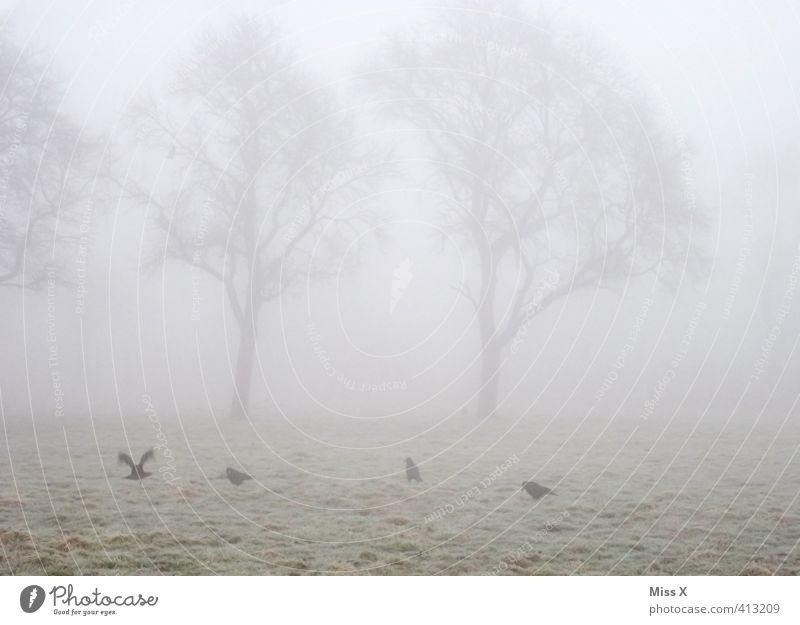 November Baum Tier Winter kalt Tod Herbst Stimmung Wetter Feld Nebel Wildtier trist Trauer Müdigkeit Taube schlechtes Wetter