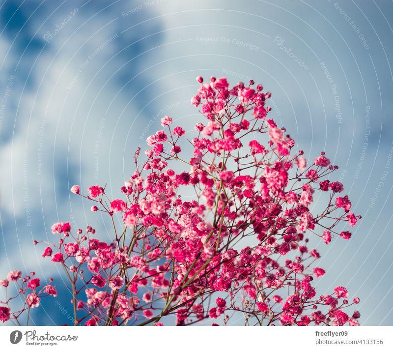Rosa Blumen gegen den Himmel rosa Szene Hintergrund abstrakt Gras Attrappe Textfreiraum Rechteck Wolken Natur Licht natürlich keine Menschen niemand organisch