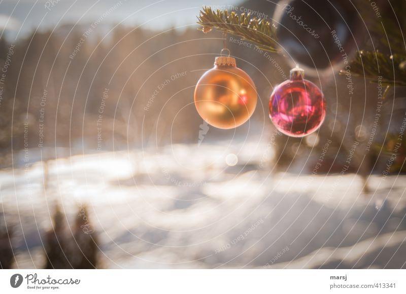 Was, jetzt schon? Winter Weihnachten & Advent Dekoration & Verzierung Kitsch Krimskrams Christbaumkugel Kugel hängen leuchten gold rot Farbfoto mehrfarbig