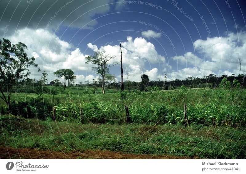 Zelaya Sur Landwirtschaft Amerika Urwald Abholzung
