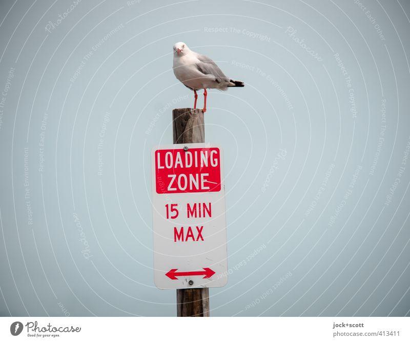 please be mindful of our rules Himmel Verkehrszeichen Verkehrsschild Möwe 1 Tier Hinweisschild Warnschild Pfeil beobachten stehen Interesse Kontrolle Ordnung