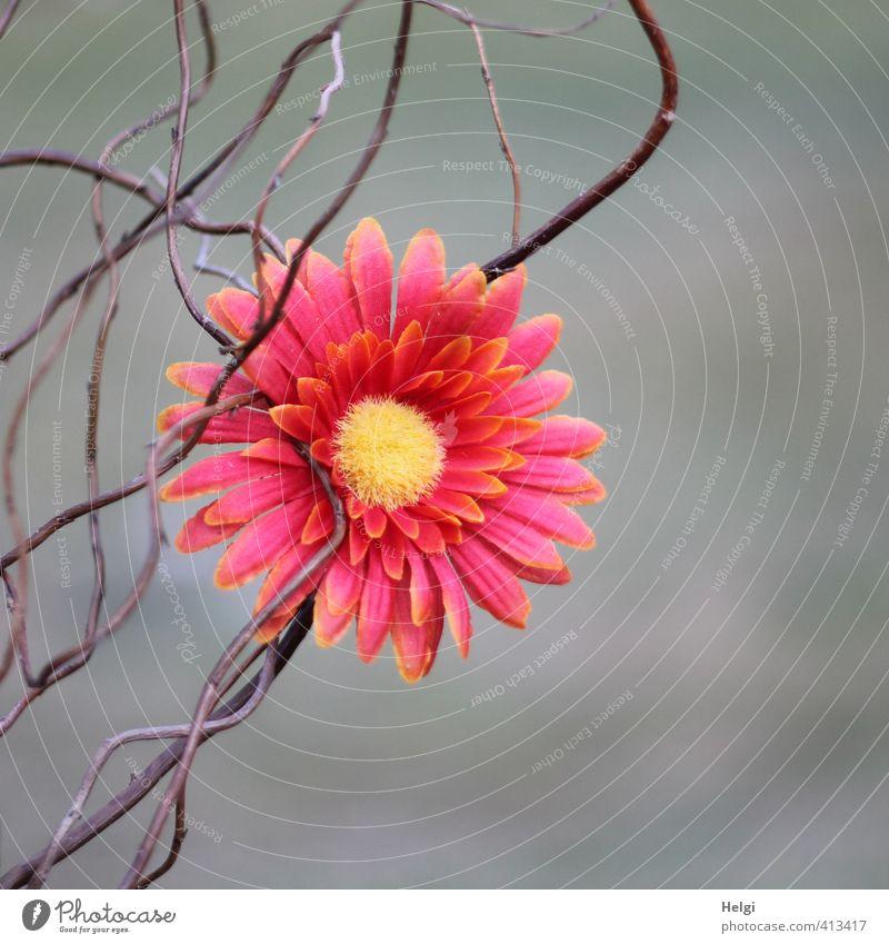 Deko... Blume Blüte Zweig Dekoration & Verzierung Kitsch Krimskrams Holz Kunststoff Blühend ästhetisch außergewöhnlich einfach schön einzigartig braun gelb grau