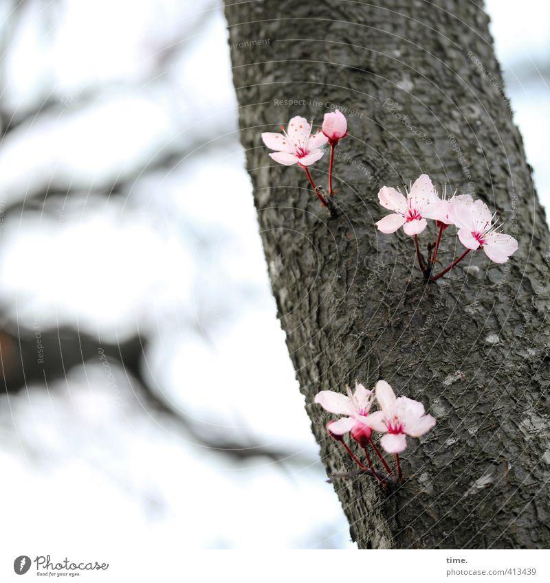Pflanze   Wo ein Wille ist ... Natur schön grün Pflanze Baum Umwelt Leben Gefühle Wege & Pfade Frühling Blüte rosa Wachstum Macht Wandel & Veränderung einzigartig
