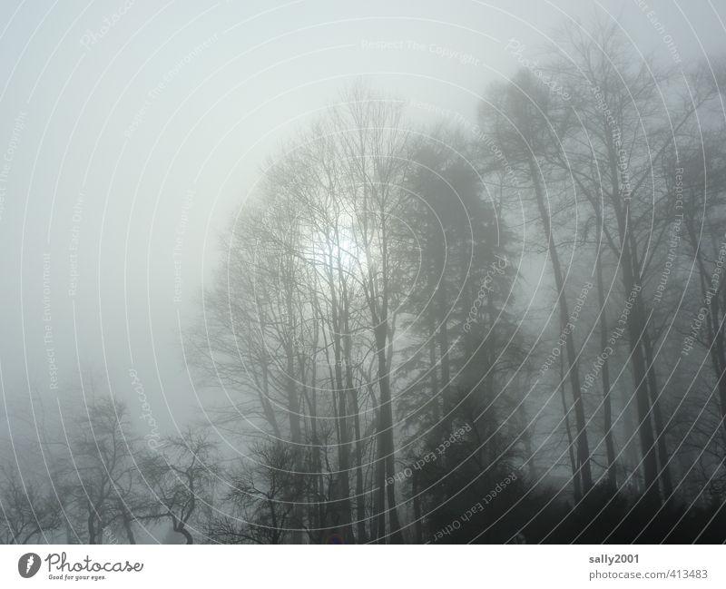 kalte Sonne... Natur Pflanze Wolken Sonnenlicht Winter Nebel Eis Frost Baum Park Wald bedrohlich dunkel Einsamkeit bizarr Endzeitstimmung Frieden stagnierend