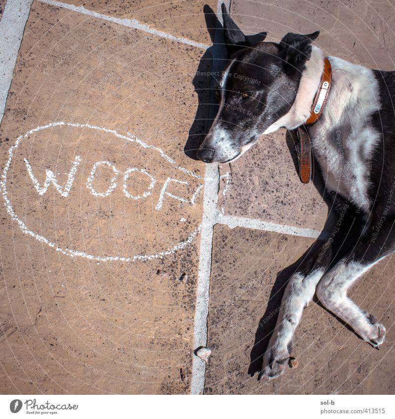 Wuff Tier Haustier Hund 1 lustig schwarz weiß gereizt Gruß Hundekopf Kreidezeichnung Witz ruhen Sprechblase Tierlaute liegen zynisch Windhund Terrasse Sonnenbad