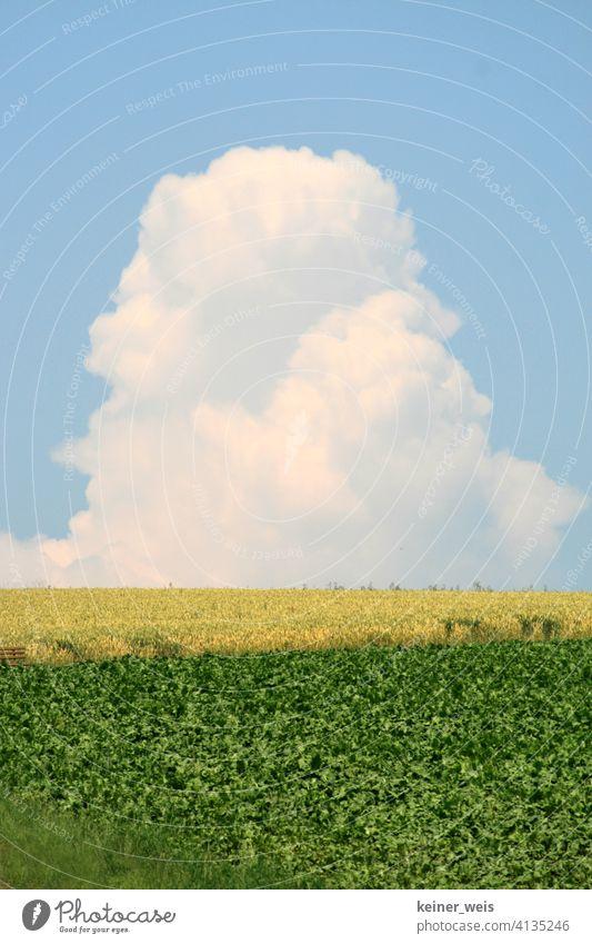 Unwetterwolke wächst zu einer Turmwolke wie ein Monstrum Wolke Gewitterwolke Wolkenturm Wetter Feld Agrar Acker blau gelb grün Quellwolke Vorsicht