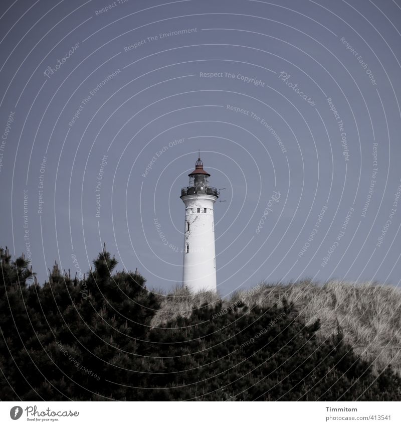 Lyngvig Fyr. Himmel Natur Ferien & Urlaub & Reisen blau weiß Pflanze schwarz Umwelt stehen Sträucher einfach Coolness Düne Leuchtturm Dänemark Turmspitze