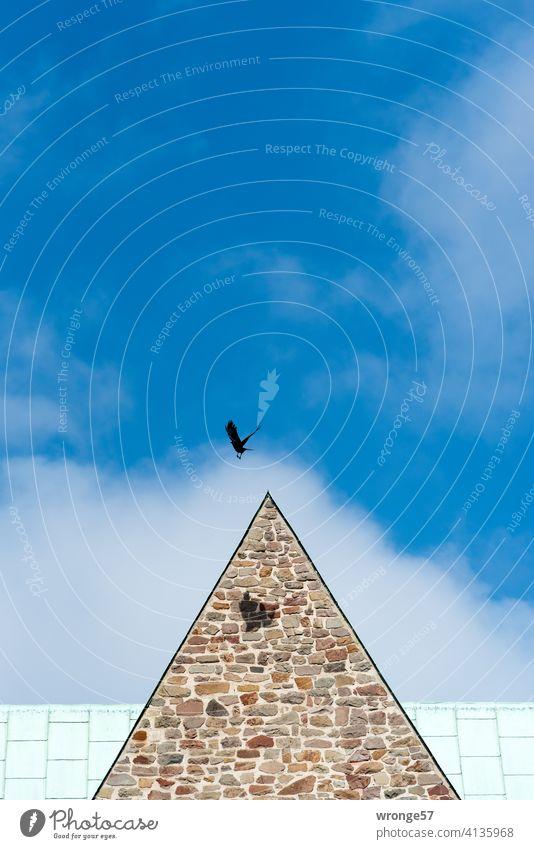 Grenzenlos   eine Krähe fliegt über den Dächern einer Kirche, ihr Schatten fällt auf das Mauerwerk derselben Kirchendach fliegen Flug Himmel Schönes Wetter