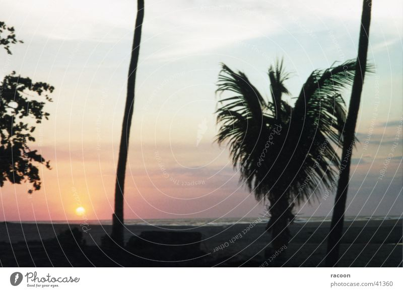 Nicaragua Natur Strand Palme