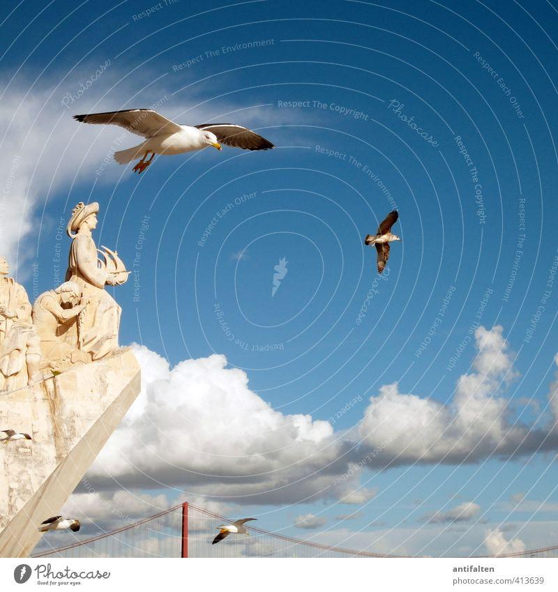 Die Aussicht genießen Himmel Ferien & Urlaub & Reisen blau schön weiß Sommer ruhig Wolken Tier Freiheit natürlich Luft fliegen Tourismus Schönes Wetter