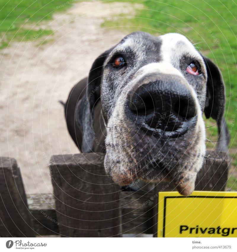 Heul doch | Wachhund a.D. Zaun Wiese Tier Haustier Hund 1 alt authentisch Krankheit loyal Ehrlichkeit Weisheit Trauer Sehnsucht Erschöpfung bizarr Einsamkeit