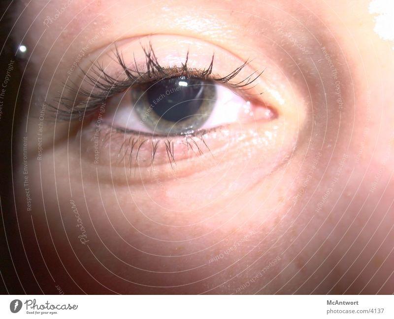 glotz Auge Fototechnik