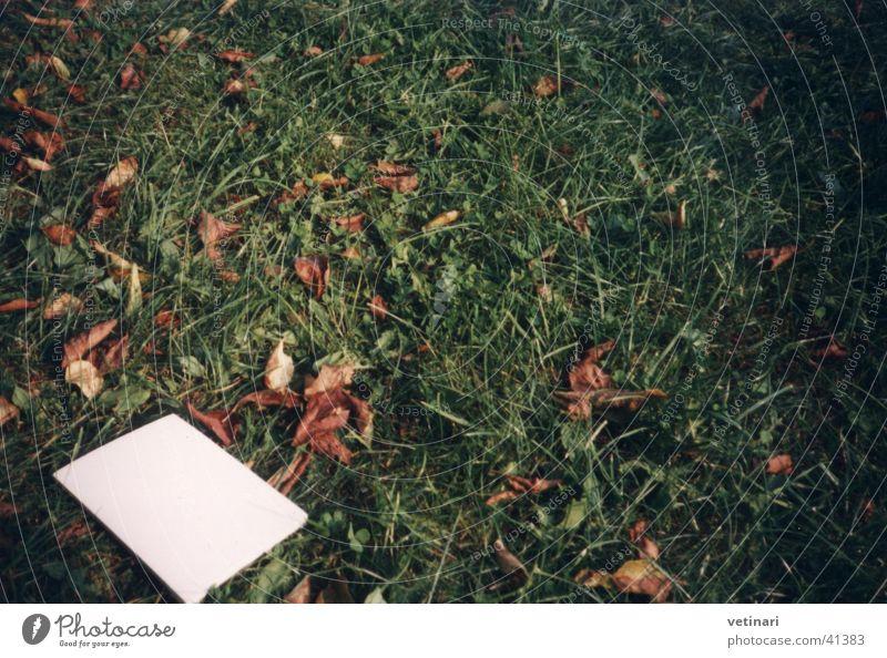 Herbstrasen grün Blatt Wiese Gras Garten Buch Rasen