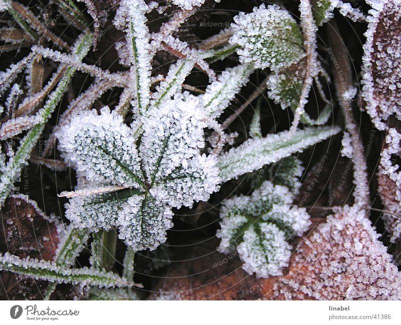 Erster Frost Winter Blatt kalt Eis Frost Raureif Eiskristall