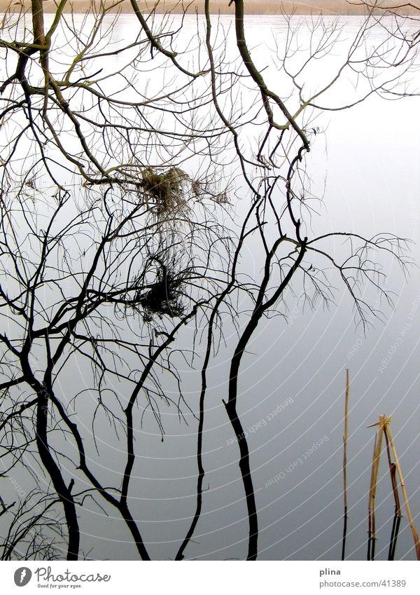 spiegelast Winter grau See Ast graphisch