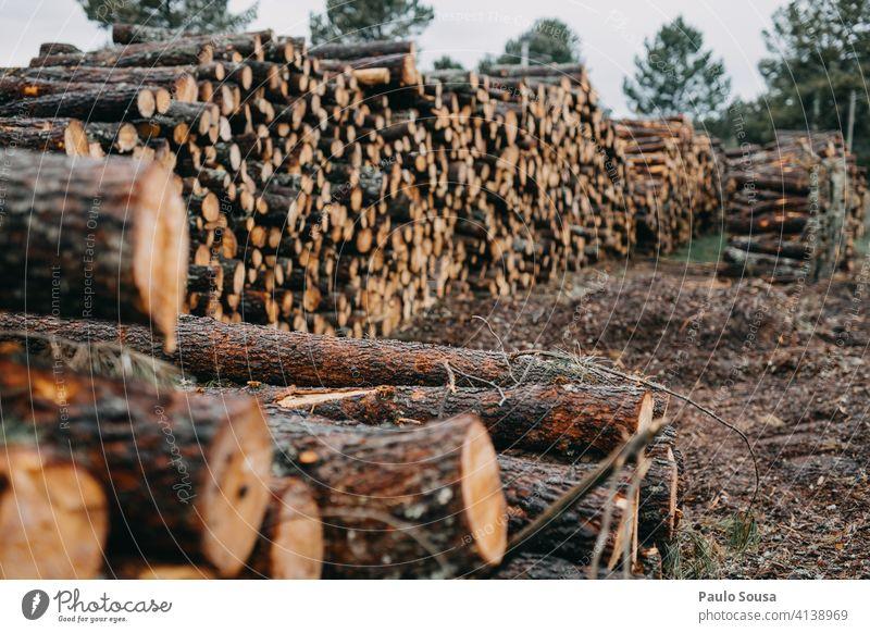 Stapel von Kiefernholz Haufen Holz Industrie Nutzholz Baum Wald Kofferraum Totholz Natur natürlich Holzstapel geschnitten Material Forstwirtschaft gestapelt