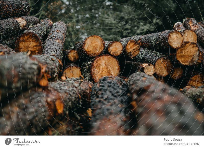 Stapel von Kiefernholz Holz Natur Farbfoto Kiefernzapfen braun Außenaufnahme Baum Menschenleer Zapfen natürlich Umwelt Haufen Jahreszeiten Herbst Wald Pflanze