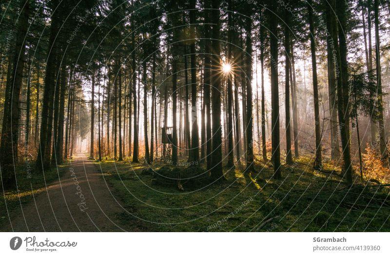 Sonnenaufgang im Wald Natur Landschaft Waldlichtung Umwelt Außenaufnahme Sonnenlicht Schönes Wetter Wege & Pfade Menschenleer Lichterscheinung Lichtstrahl