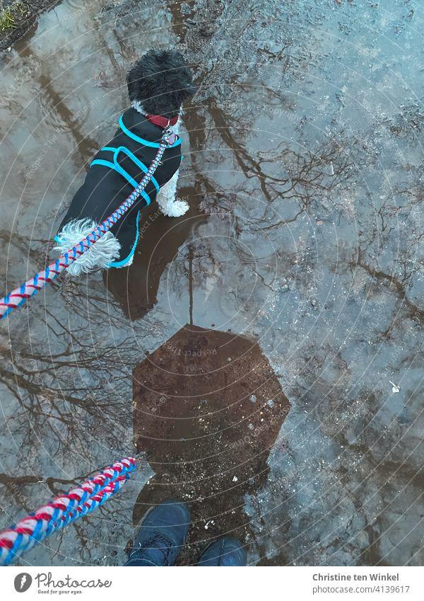 Spaziergang im Regen... Pfütze mit Spiegelung von Bäumen, Hund und Regenschirm. Hund mit Regenmantel und Leine Gassigehen Gassi gehen Hunderunde