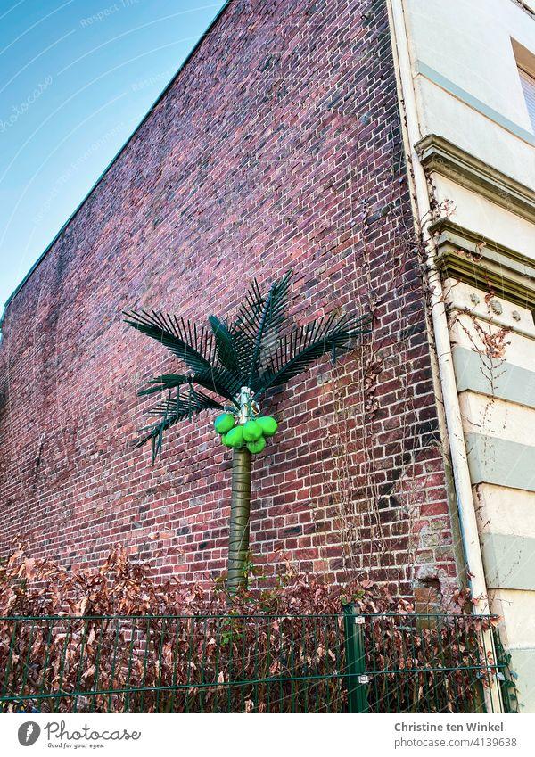 Eine künstliche Palme mit leuchtend hellgrünen Kokosnüssen steht an der seitlichen Backsteinfassade eines alten Hauses hinter einem Stabgitterzaun und einer Buchenhecke