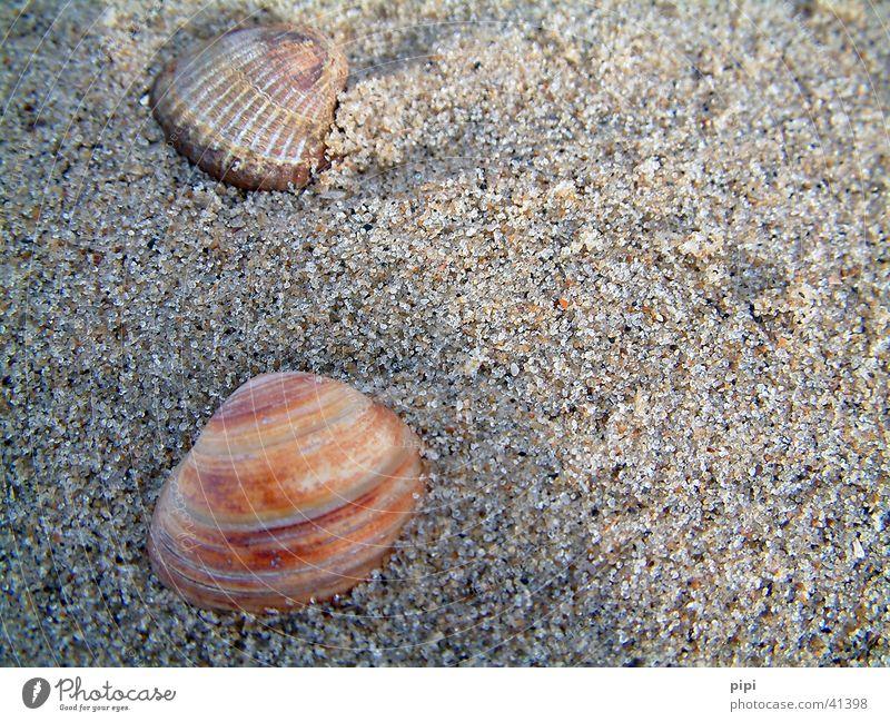muschel_II Strand Niederlande mehrfarbig Meer Sand Wasser