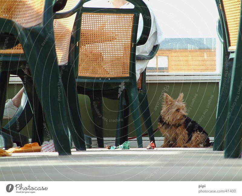 wauwau Meer Strand Tier Hund Langeweile Niederlande