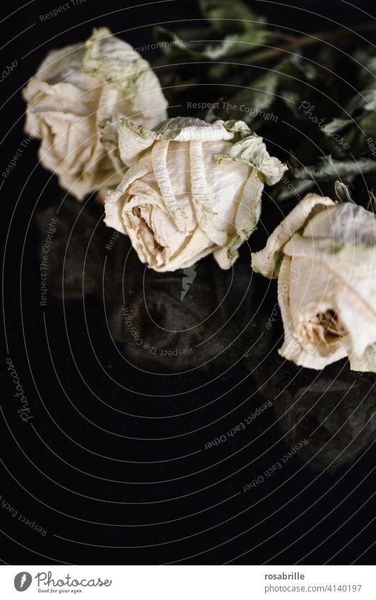 die   Illusion   der ewigen Schönheit - verwelkte weiße Rosen verwelken Vergänglichkeit ehemals damals vorbei Vergangenheit alt gealtert altern Verlust Trauer
