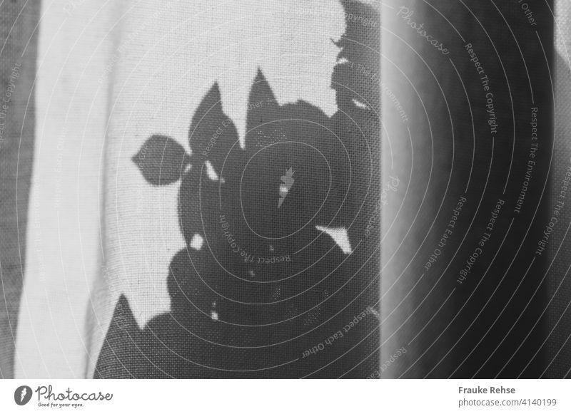 Vorhang mit Schatten einer Pflanze Basilikum Licht und Schatten Fensterbank Gardine Stoff Tag Kontrast Blätter schwarzweiß