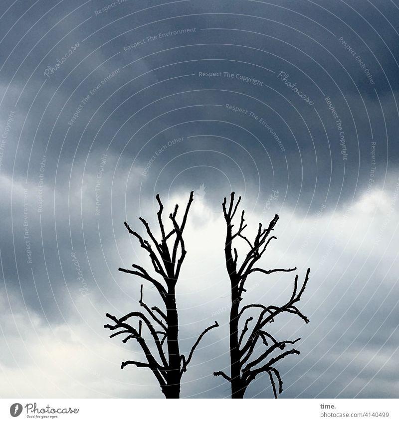 neulich in der Apokalypse Baum baumstamm kahl himmel wolken leer gespentisch 2 bedrohlich ast äste
