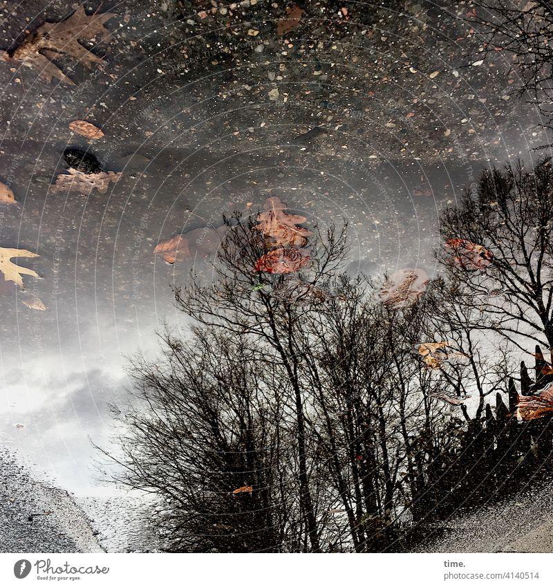 Fundstücke laub eichenblätter pfütze baum bäume spiegelung asphalt straße weg braun himmel herbst