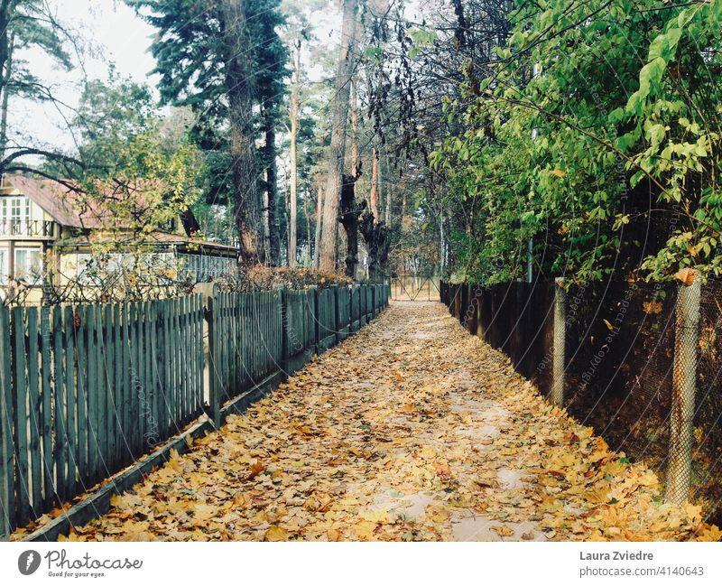 Die Straße im Herbst Herbstlaub Herbstfärbung Herbststimmung Herbstfarben Herbstgefühle Herbstlicht gelbe Blätter Gasse Natur Alter Zaun Blätter auf dem Boden