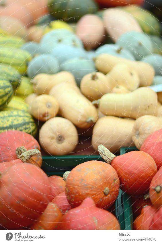 Kürbiszeit Lebensmittel Gemüse Ernährung Bioprodukte Vegetarische Ernährung Diät frisch Gesundheit lecker rund Sorte viele verkaufen Ernte Marktstand