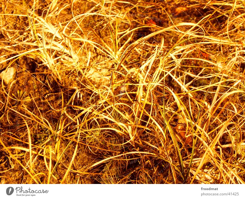 behaartes Land Blatt Gras Erde Bodenbelag Untergrund