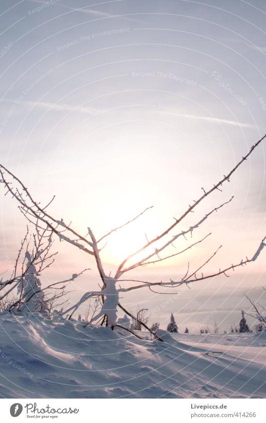 ganz oben Umwelt Natur Landschaft Pflanze Urelemente Wasser Himmel Wolkenloser Himmel Sonne Sonnenaufgang Sonnenuntergang Sonnenlicht Winter Schönes Wetter