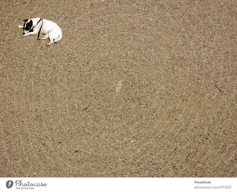 Eckenhund Hund Kieselsteine Einsamkeit Müdigkeit Vogelperspektive Sand leer liegen Straßenhund