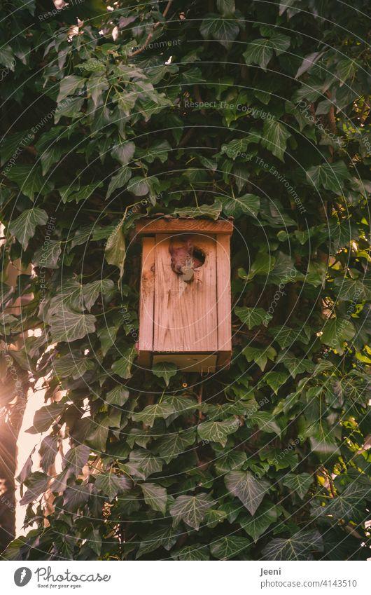 Da hat sich doch glatt das Eichhörnchen den Nistkasten zu seinem neuen Zuhause umgebaut und genießt entspannt den Ausblick aus dem Einflugloch zuhause Haus