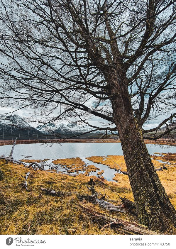 large  tree  leaning  over  the lagoon outdoor landscape nature natural water lake mountains winter