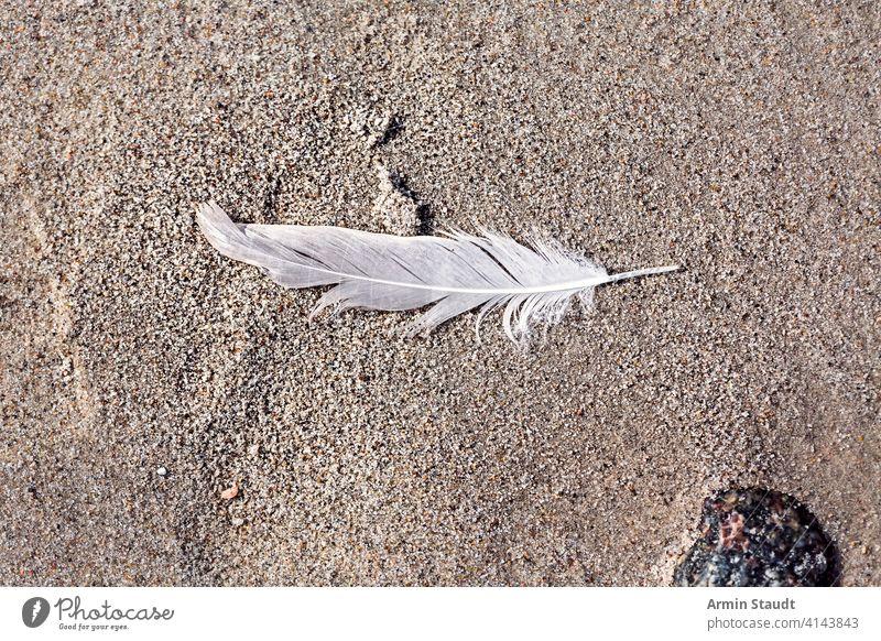 Makro einer alten Feder, die am Strand liegt Verlassen Algen Hintergrund Vogel verschwommen Nahaufnahme Schmutz verirrt Natur niemand im Freien Kieselsteine