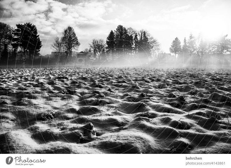 hoffnung licht sonnenstrahlen Sonne Sonnenlicht Schneefall weiß ruhig Umwelt Natur Wiese Feld Winter Wald Himmel Landschaft Frost Bäume Winterlandschaft kalt