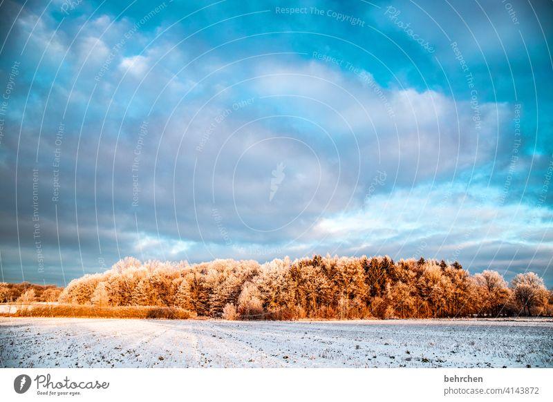 morgenstund hat gold im mund Wolken Farbfoto ruhig Umwelt Landschaft Himmel frieren gefroren Raureif Jahreszeiten Frost Natur Wiese Feld Bäume stille Wetter