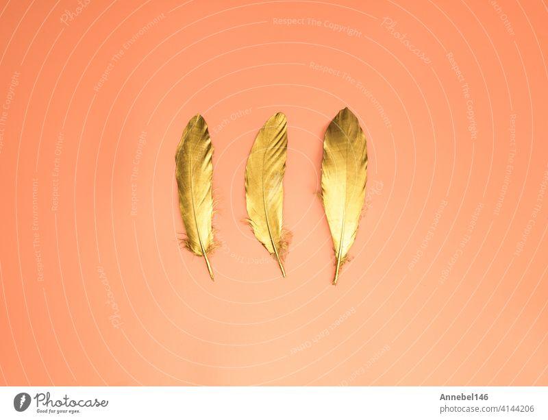 Satz von Luxus Gold glänzende Federn auf orange Pfirsich Hintergrund Draufsicht modernes Design mit Kopie Raum, dekorative Fantasy-Vogel Schönheit abstrakt