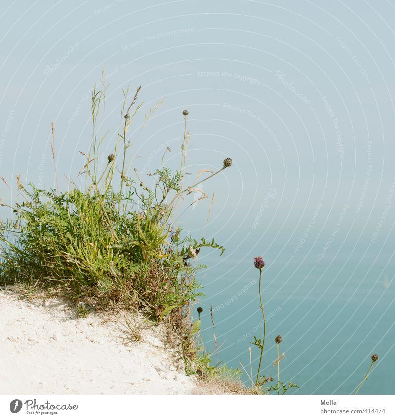 Hoch oben Umwelt Natur Landschaft Pflanze Erde Himmel Blume Gras Wiese Felsen Küste Meer Klippe Kreidefelsen Blühend Wachstum natürlich trocken blau Horizont