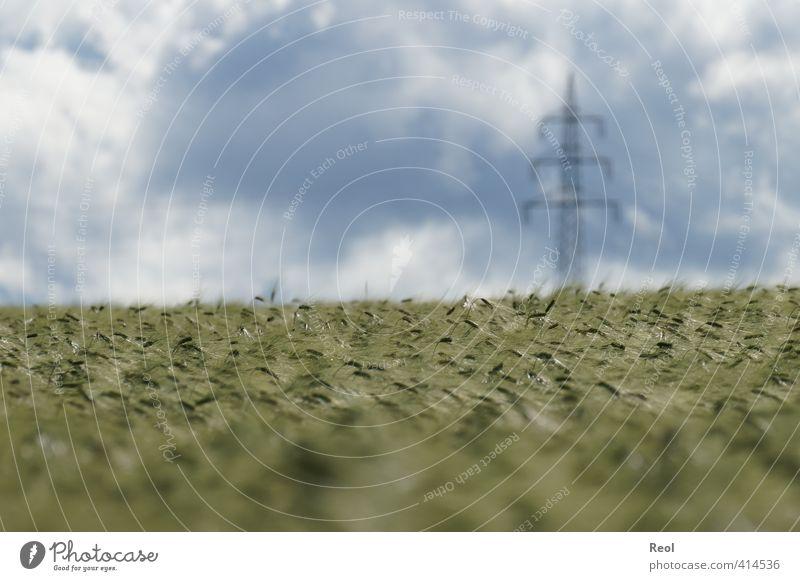 Energie für Mensch und Tier Himmel Natur blau grün Pflanze Sommer Landschaft Wolken Tier Gras Horizont Feld Energiewirtschaft modern Schönes Wetter Strommast