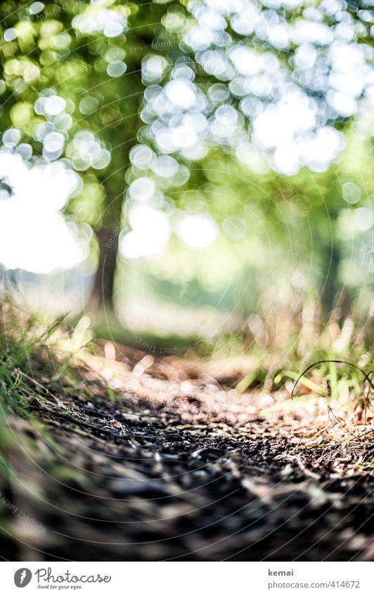 Pflanze | Sommergedanken Umwelt Natur Landschaft Erde Sonne Sonnenlicht schlechtes Wetter Wärme Baum Gras Park Wege & Pfade Fußweg schön unten grün Leben