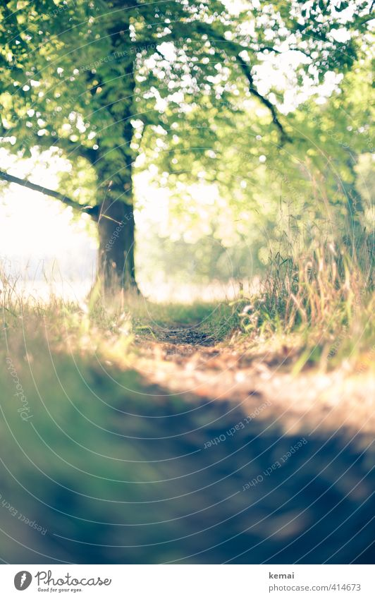 Dank an den Sommer Umwelt Natur Landschaft Pflanze Schönes Wetter Wärme Baum Gras Grünpflanze Park Wege & Pfade frisch schön grün Glück Warmherzigkeit