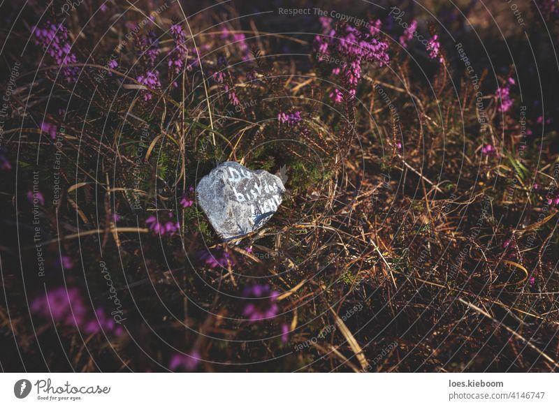 """Stein mit motivierendem deutschen Text """"Du bist das Licht"""" auf Waldboden, der mit blühender Frühlingsheide bedeckt ist zitieren Motivation Selbstversorgung"""