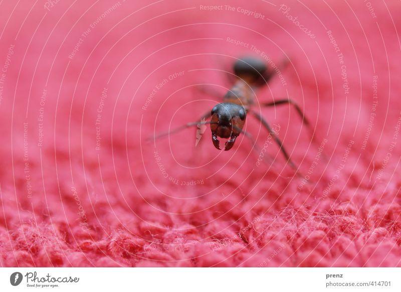 Der tut nix... Umwelt Natur Tier Wildtier 1 braun rot Ameise Waldameise Insekt Farbfoto Außenaufnahme Nahaufnahme Makroaufnahme Menschenleer Textfreiraum links