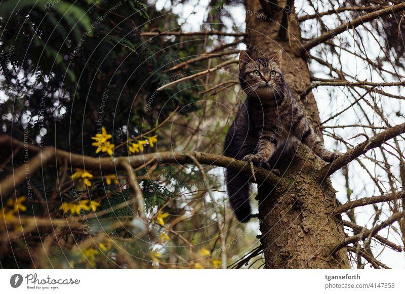Katze im Baum Außenaufnahme Natur Tier Menschenleer Haustier Tierporträt 1 Farbfoto Blick beobachten Hauskatze Neugier niedlich Fell Wachsamkeit Tag lauernd